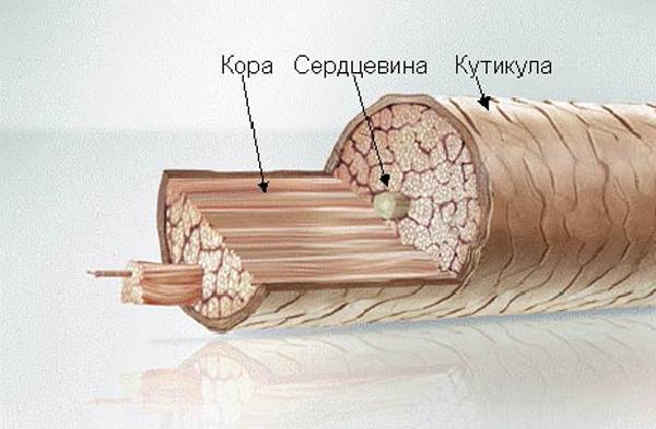 Кератиновое восстановление волос народными средствами